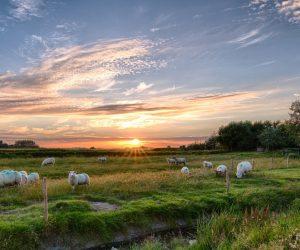 Τα κύρια σημεία του νέου σχεδίου νόμου για την κτηνοτροφία
